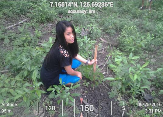 SVB hat das Aufforsten in sein Programm aufgenommen und sich als Partner die MAMA EARTH Foundation ausgewählt, welche bereits über eine Million Mangroven im Golf von Davao/Philippinen gepflanzt hat. (Bild 20 von 27)