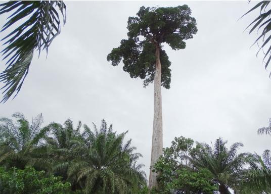 SVB hat das Aufforsten in sein Programm aufgenommen und sich als Partner die MAMA EARTH Foundation ausgewählt, welche bereits über eine Million Mangroven im Golf von Davao/Philippinen gepflanzt hat. (Bild 12 von 27)