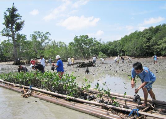 SVB hat das Aufforsten in sein Programm aufgenommen und sich als Partner die MAMA EARTH Foundation ausgewählt, welche bereits über eine Million Mangroven im Golf von Davao/Philippinen gepflanzt hat. (Bild 21 von 27)