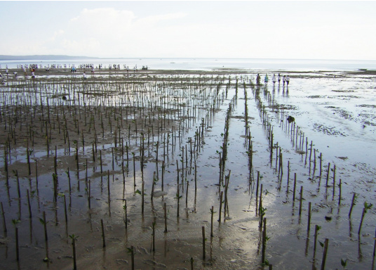 SVB hat das Aufforsten in sein Programm aufgenommen und sich als Partner die MAMA EARTH Foundation ausgewählt, welche bereits über eine Million Mangroven im Golf von Davao/Philippinen gepflanzt hat. (Bild 11 von 27)