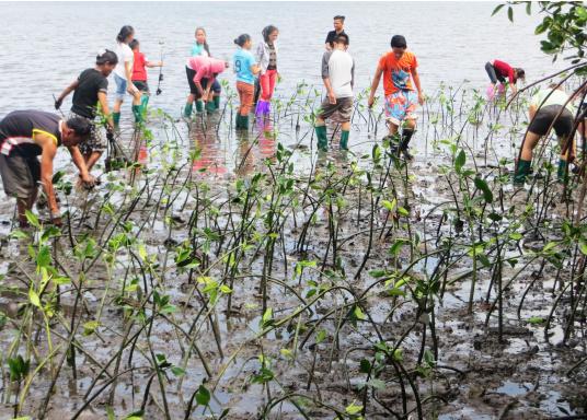 SVB hat das Aufforsten in sein Programm aufgenommen und sich als Partner die MAMA EARTH Foundation ausgewählt, welche bereits über eine Million Mangroven im Golf von Davao/Philippinen gepflanzt hat. (Bild 9 von 27)