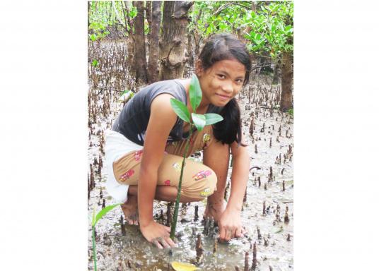 SVB hat das Aufforsten in sein Programm aufgenommen und sich als Partner die MAMA EARTH Foundation ausgewählt, welche bereits über eine Million Mangroven im Golf von Davao/Philippinen gepflanzt hat. (Bild 24 von 27)