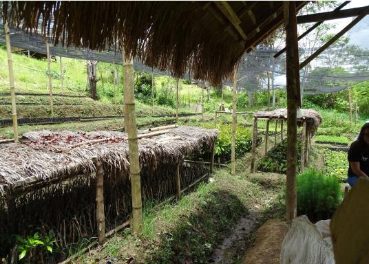 SVB hat das Aufforsten in sein Programm aufgenommen und sich als Partner die MAMA EARTH Foundation ausgewählt, welche bereits über eine Million Mangroven im Golf von Davao/Philippinen gepflanzt hat. (Bild 15 von 27)