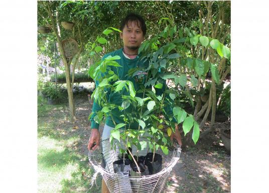 SVB hat das Aufforsten in sein Programm aufgenommen und sich als Partner die MAMA EARTH Foundation ausgewählt, welche bereits über eine Million Mangroven im Golf von Davao/Philippinen gepflanzt hat. (Bild 25 von 27)