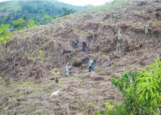 SVB hat das Aufforsten in sein Programm aufgenommen und sich als Partner die MAMA EARTH Foundation ausgewählt, welche bereits über eine Million Mangroven im Golf von Davao/Philippinen gepflanzt hat. (Bild 26 von 27)